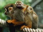 eindhoven-best-zoo
