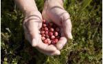 terschelling-cranberry