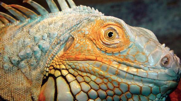 Reptielenzoo Iguana in Vlissingen