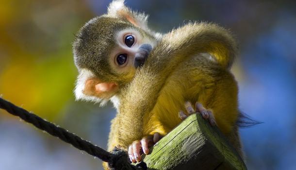 dierentuin apenheul in apeldoorn