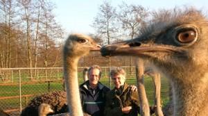 struisvogelhouderij-fam-w-de-kreij