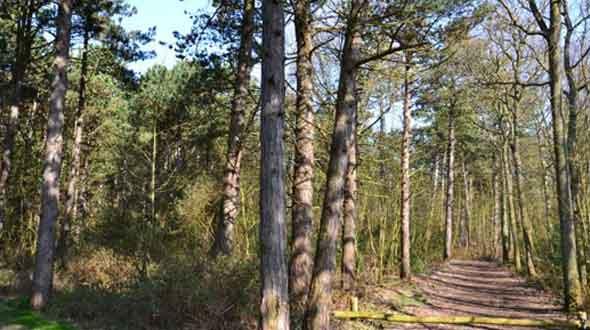 Bomenland / Vogelland wandelroute 3,5 km