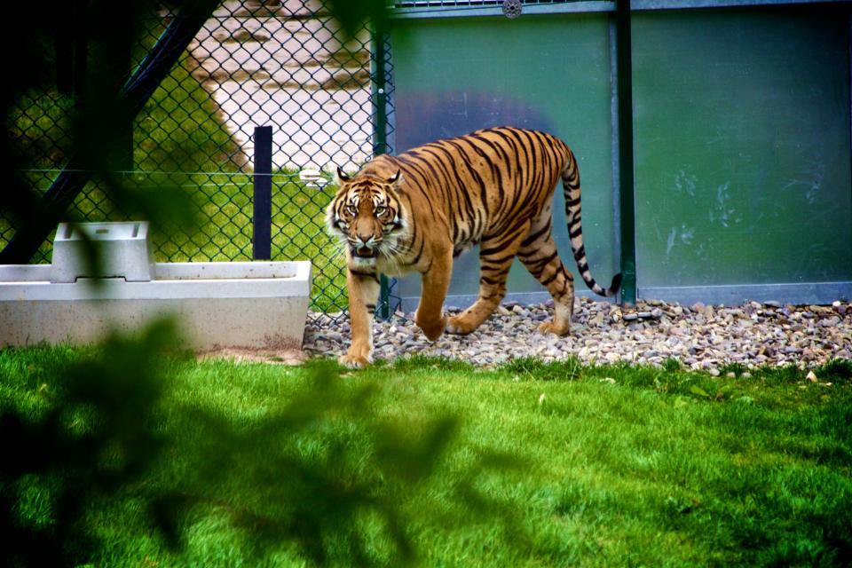 dagje uit dierentuin