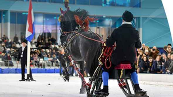 Friesians on Ice