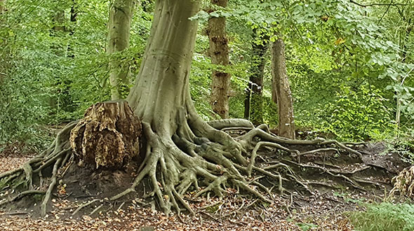 Natuur in Roosendaal