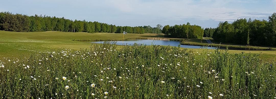 Golfen in Friesland